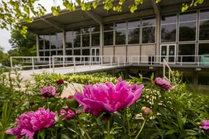 Burling Library in the spring