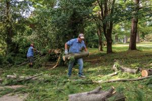 Staff gather large chunks of sawn limbs