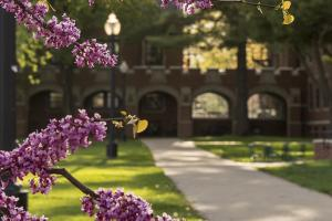 Campus shot with purple blooms on trees