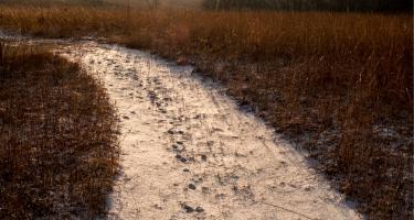 Snowy trail at CERA