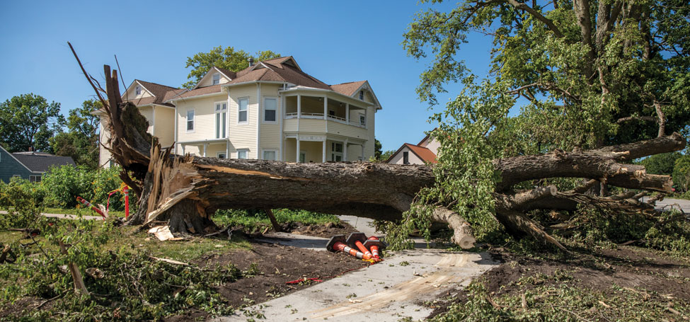 Large, old tree ripped out at the roots blocks a sidewalk with safety cones mark the obstacle