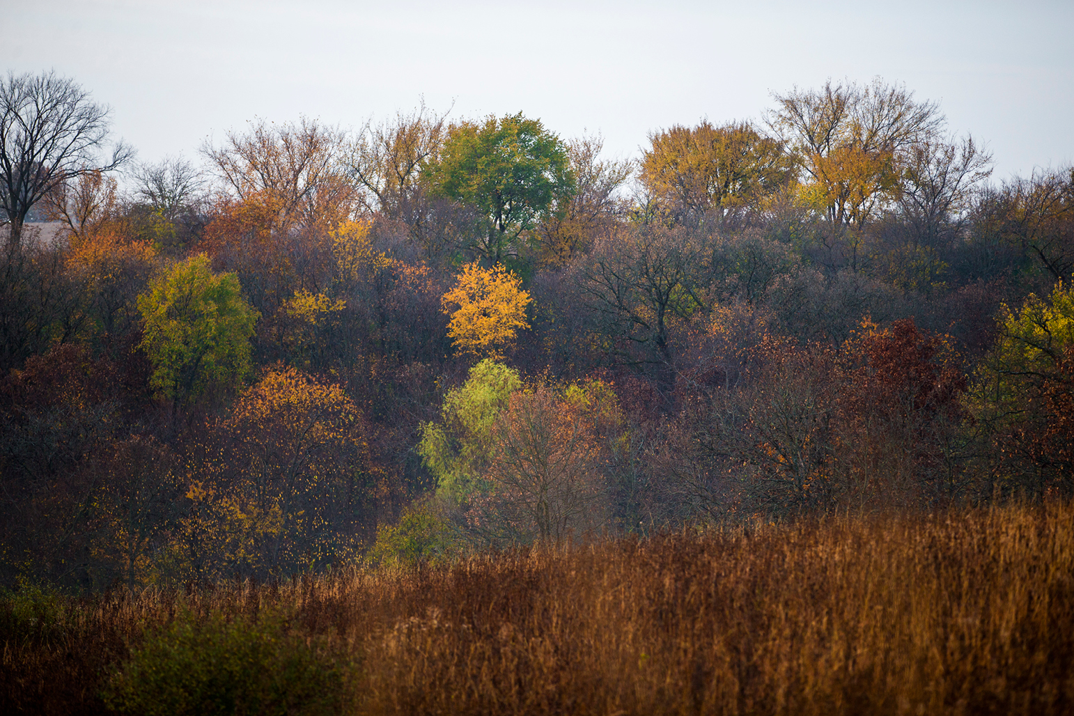 Fall colors on the trees at CERA