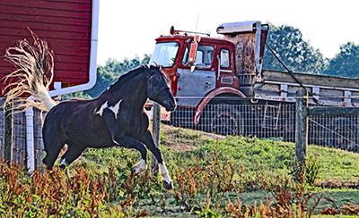 Horse jumping on farm