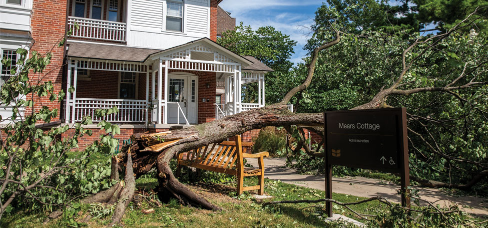 Mature tree that splintered at its base crushing wooden bench in front of  Mears Cottage