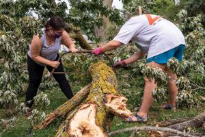 Two volunteers use a saw to cut up a large mossy downed tree limb